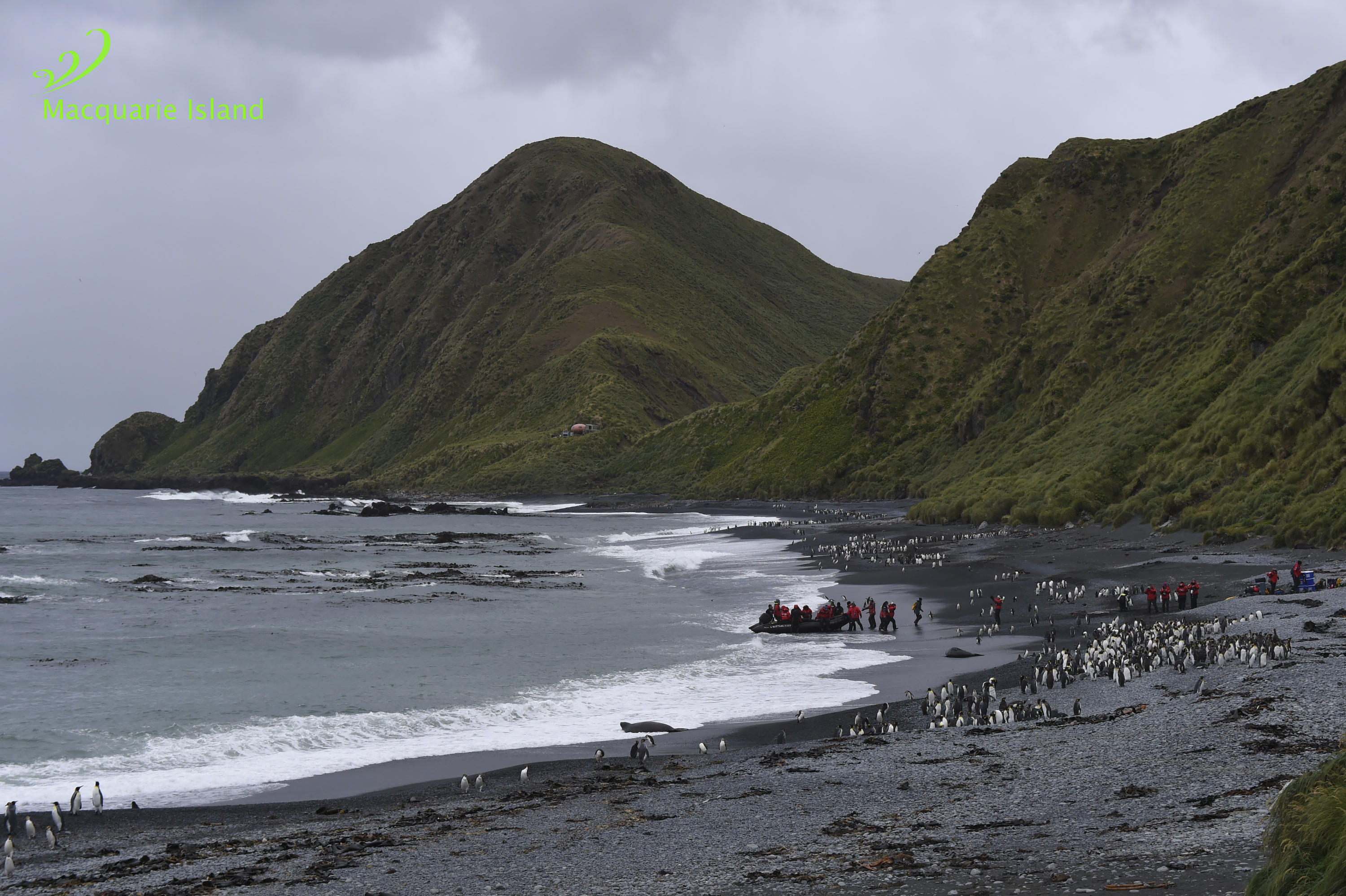 The Subantarctic Islands Expedition