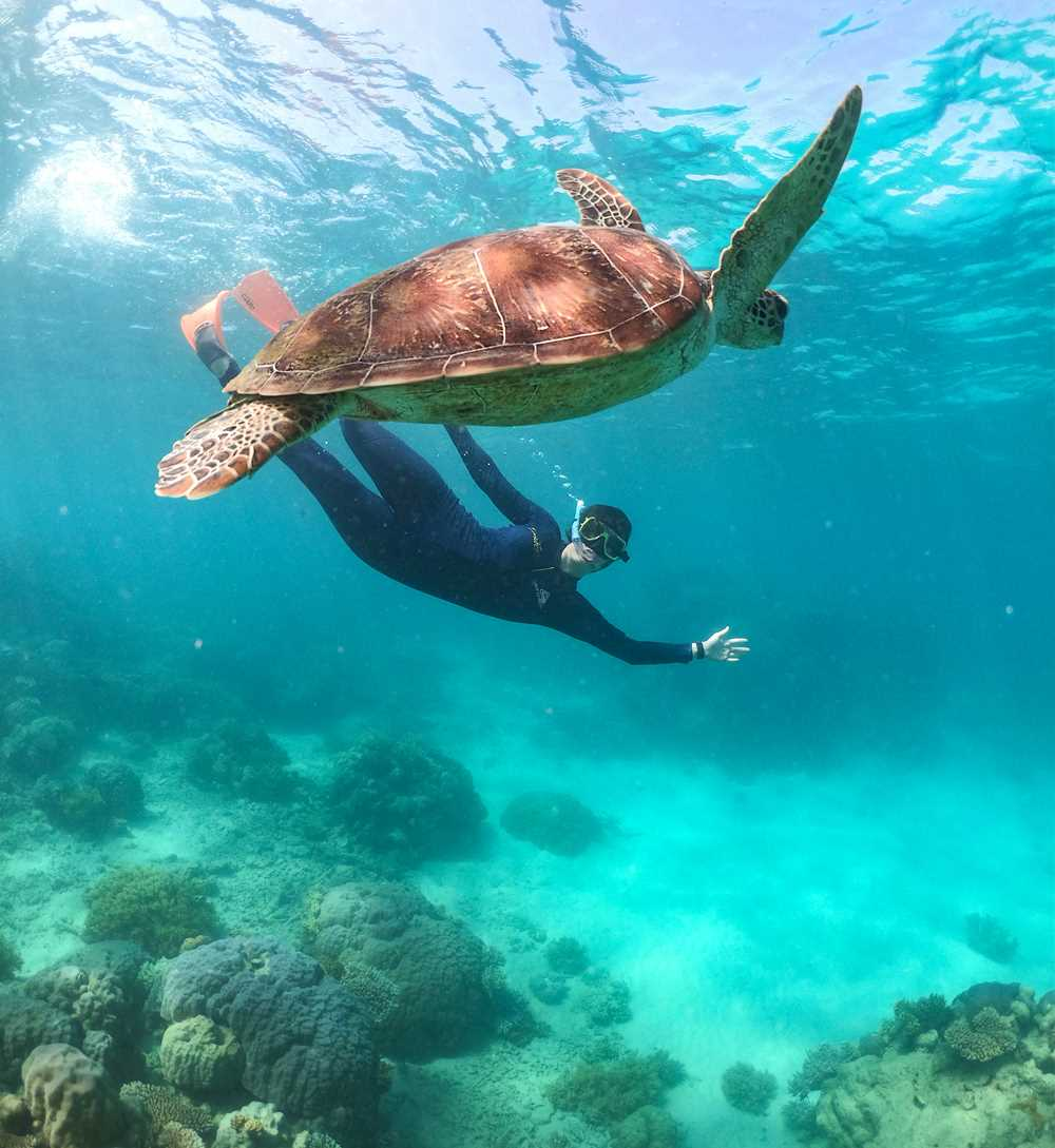 Revitalise on the Great Barrier Reef